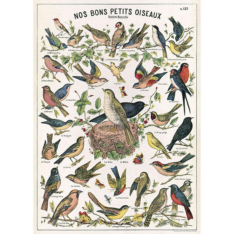 Poster Cavallini & Co Birds & Nests
