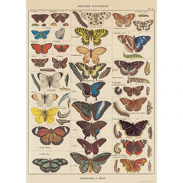 Poster Fåglar Natural History, Cavallini & Co
