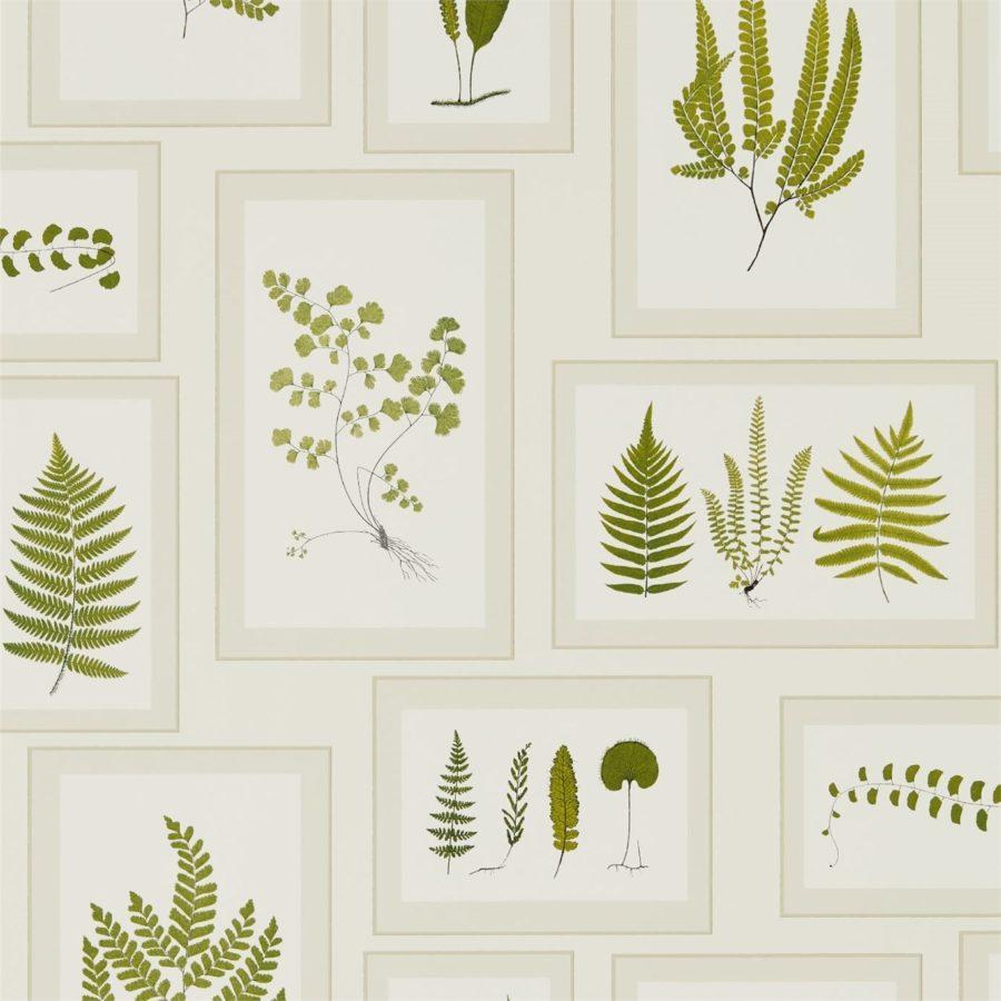 Sanderson Tapet Fern Gallery Ivory Green