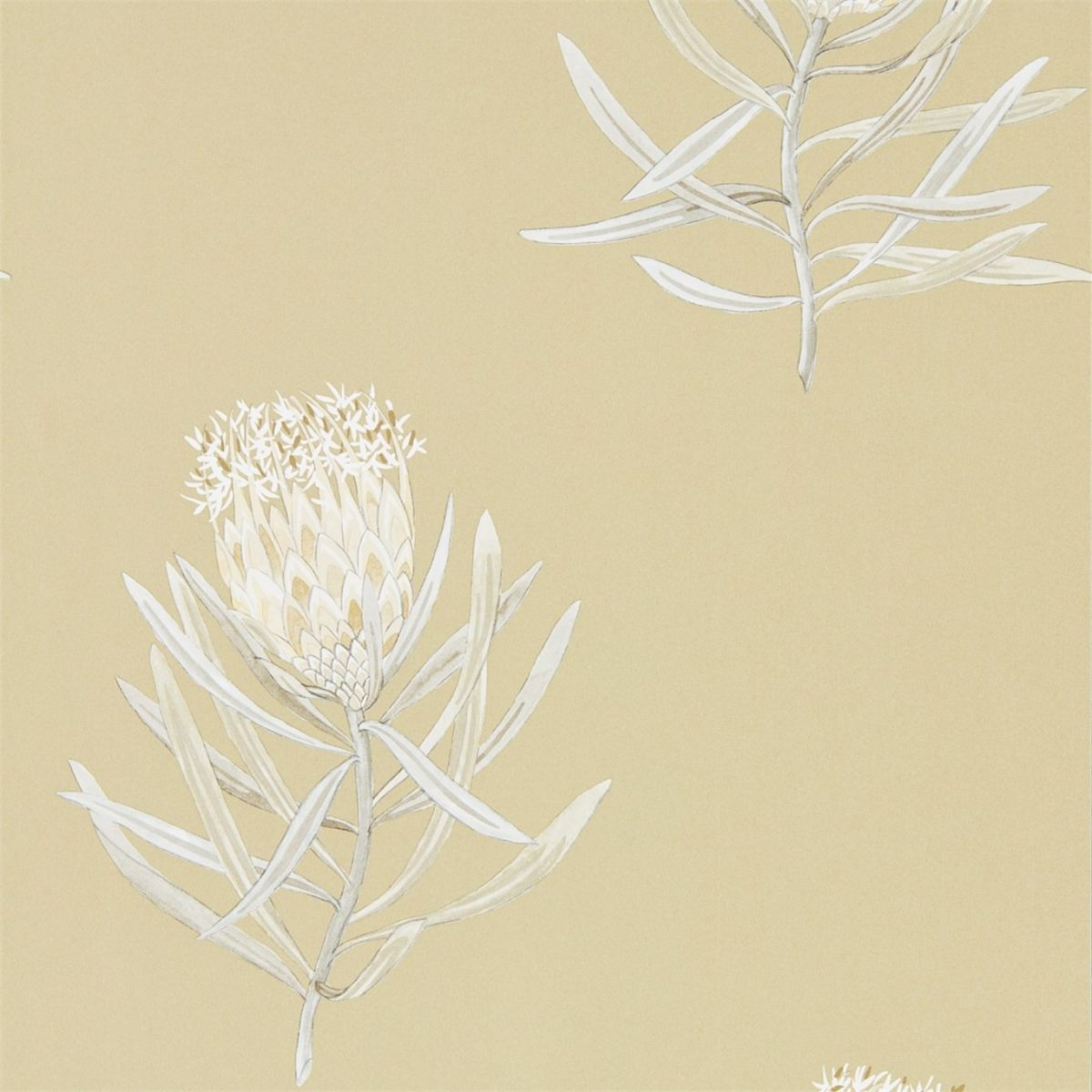 Sanderson tapet Protea Flower Sepia/Champagne