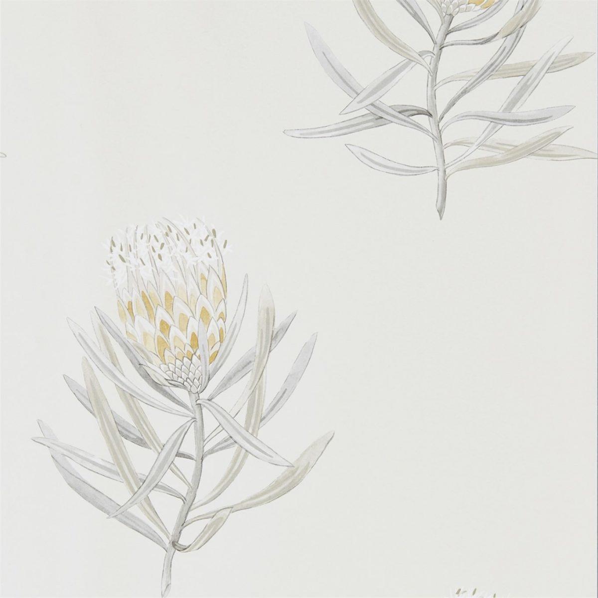 Sanderson tapet Protea Flower Daffodil/Natural