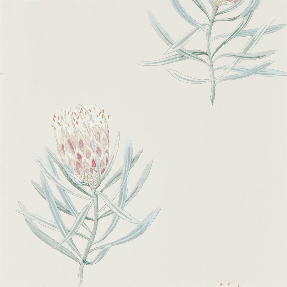 Sanderson tapet Protea Flower Porcelain/Blush