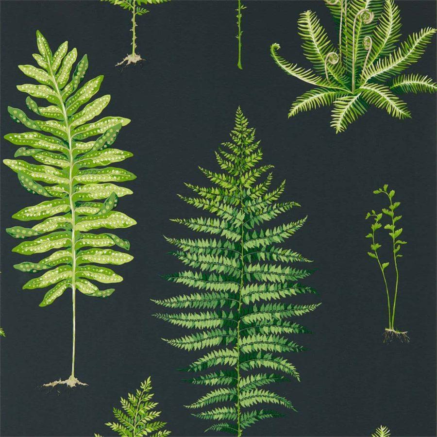 Sanderson Tapet Fernery Botanical Green Charcoal