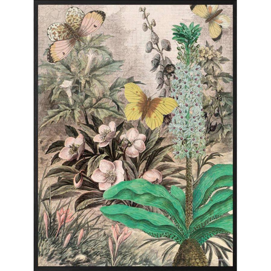 Vanilla Fly Poster Botanic vintagestil poster