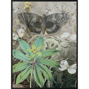 Vanilla Fly Poster Butterlies vintagestil poster