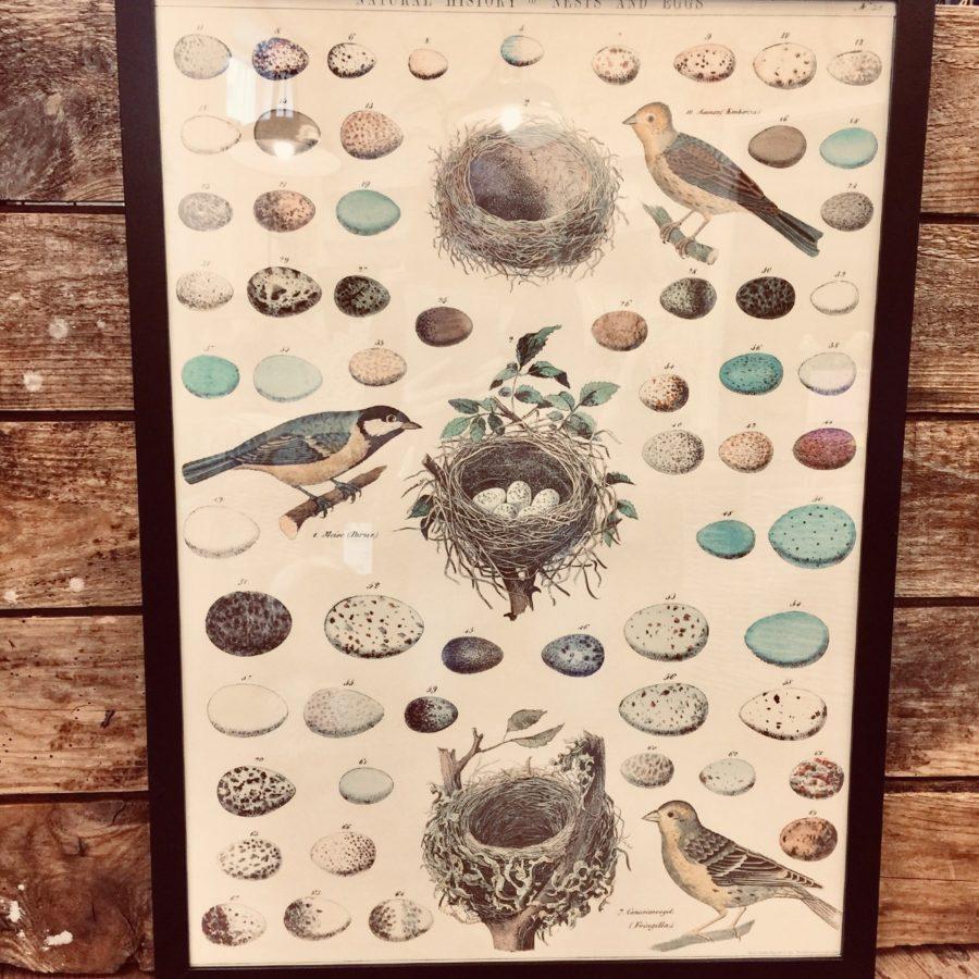 PosterCavallini & Co Fåglar & Ägg